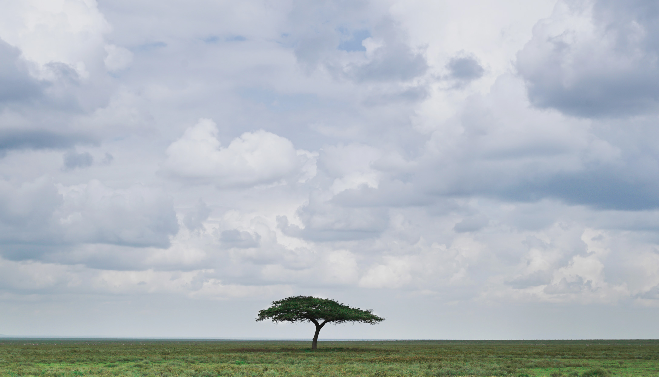 Tanzania, Africa landscape with a Solitary Tree in the middle of the Serengeti